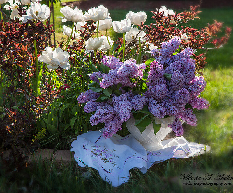Тюльпаны Angelique и сирень на рассвете-Viktoria Mullin