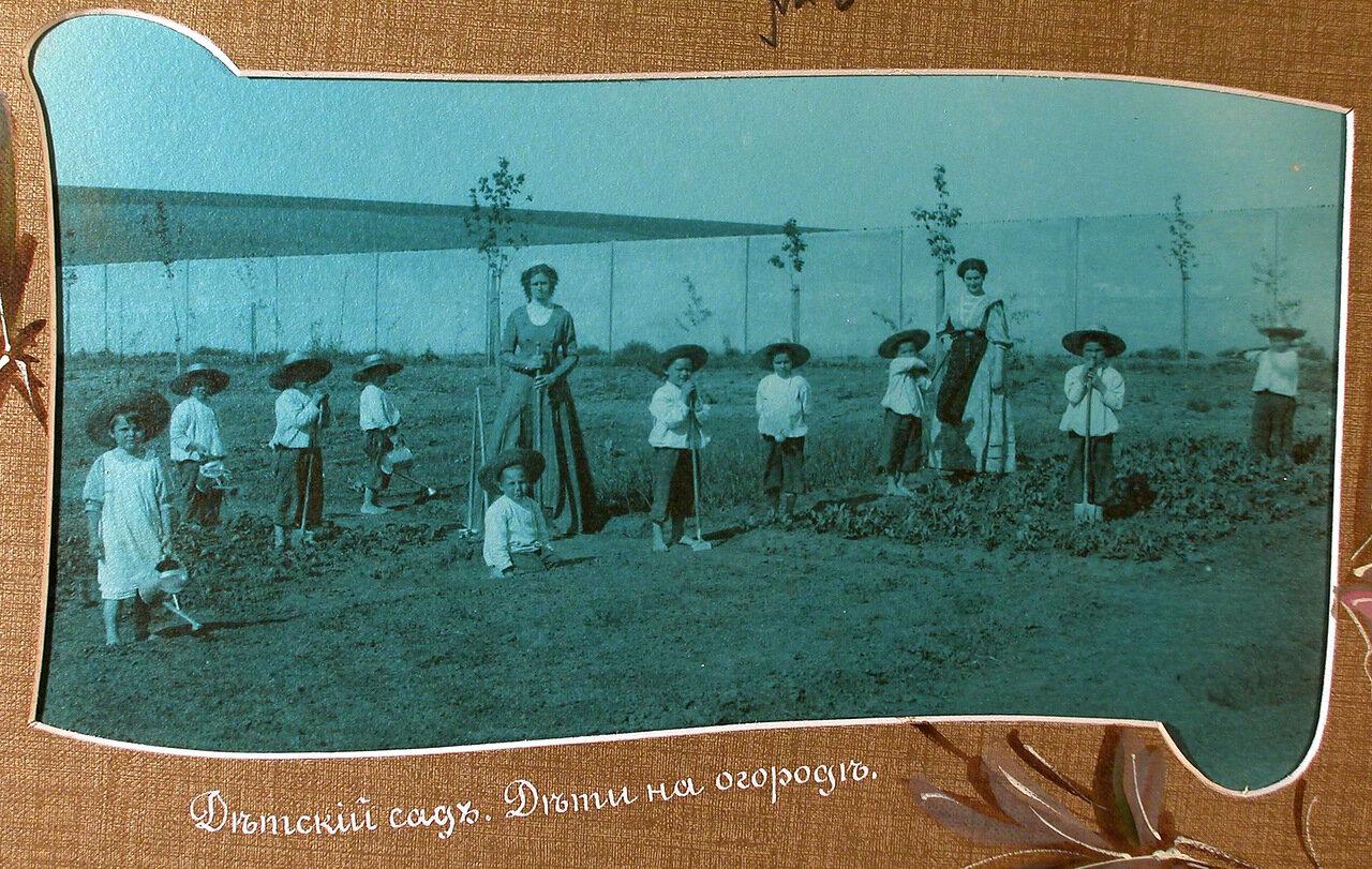 Детский сад. Дети на огороде.