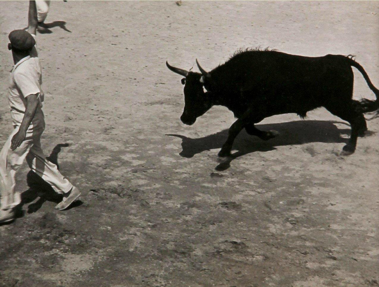 1936.  Гонки с быками в Провансе, Сент-Мари-де-ла-Мер. Часть 3