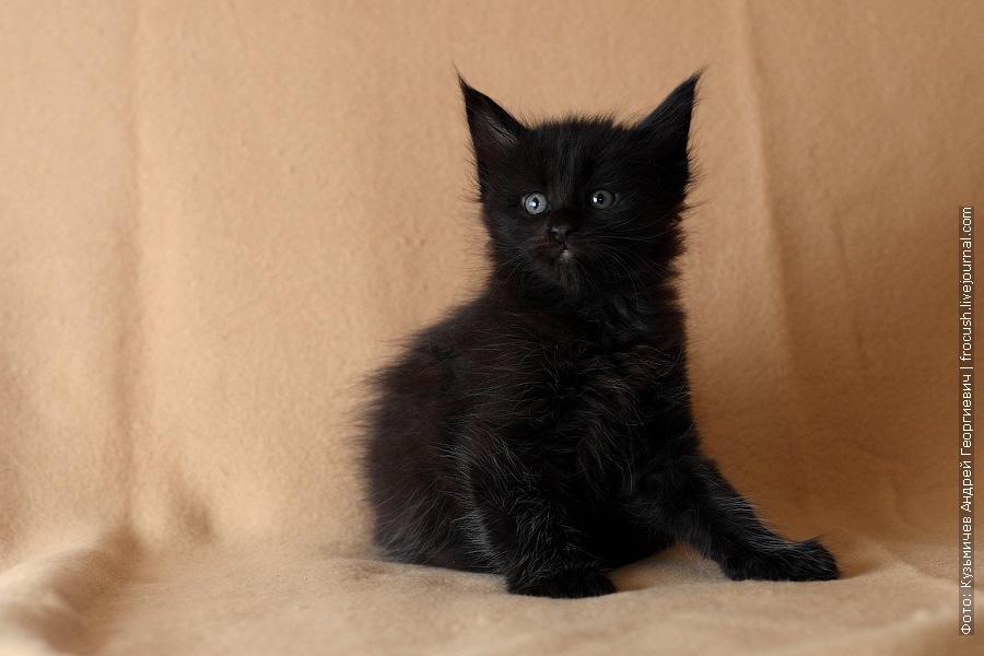 котенок мальчик менй кун