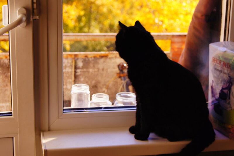 Наш кот встречает осень...