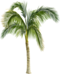 ldw_UnderPalmTree_palm.png