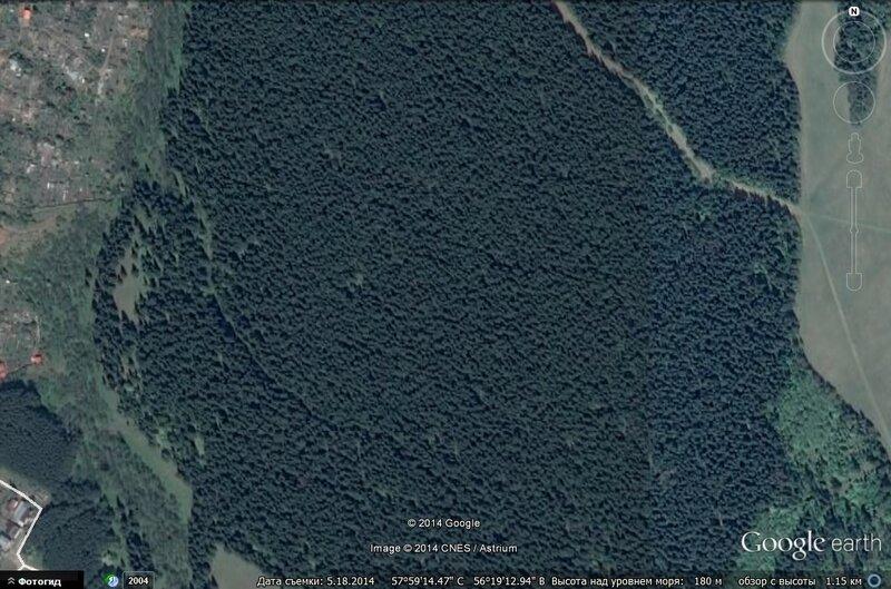 Плотность леса на Южном.jpg