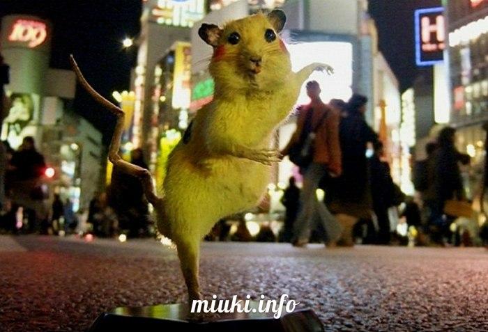 Японцы покрасили чучела уличных крыс в покемонов