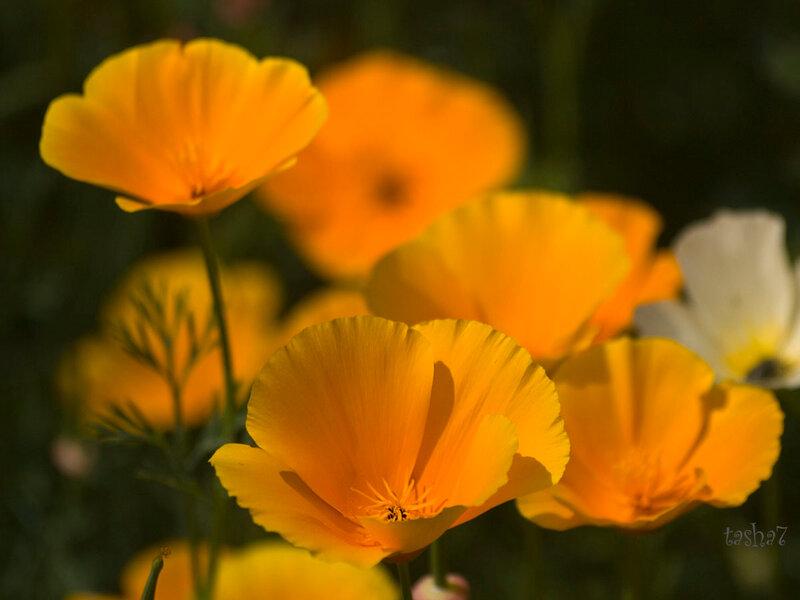 Радоваться каждому мгновенью, всё  ценить, что дал нам  в жизни Бог...