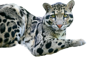 кошачьи