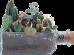 cactus (23).png