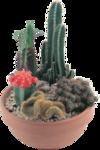 cactus (35).png