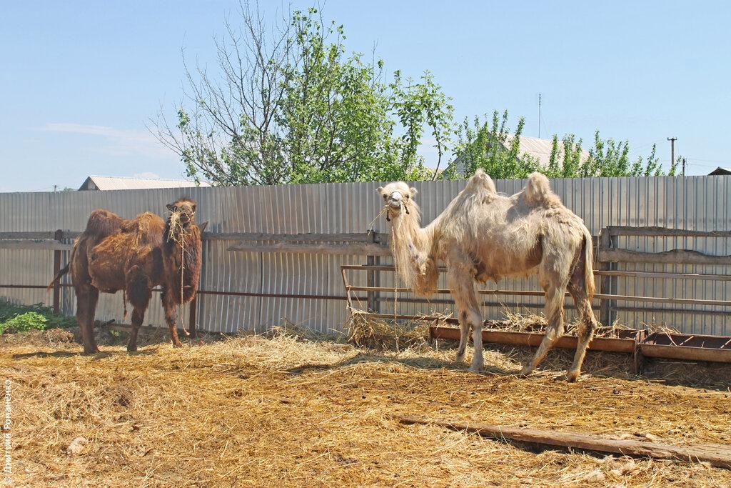 прогулка на лошадях томаровка белгород