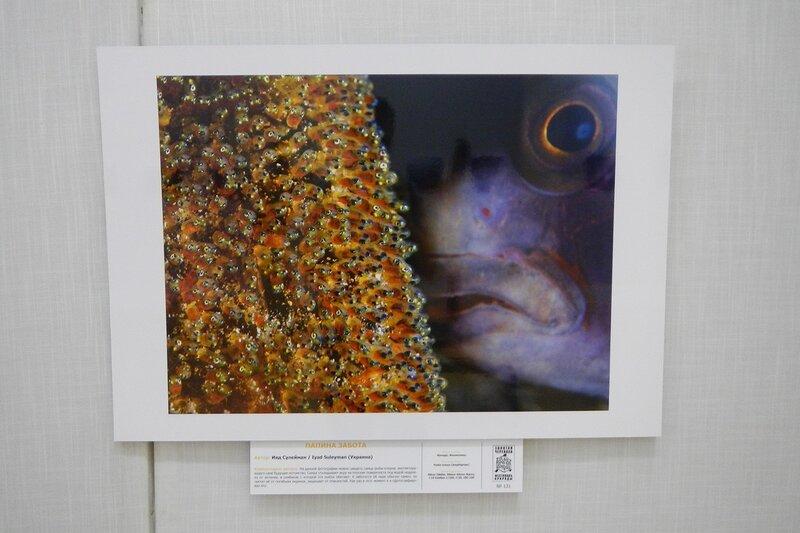 Папина забота. Ияд Сулейман (Украина). Рыба-клоун охраняет потомство. На фестивале дикой природы Золотая Черепаха