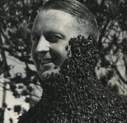 Что будет, если исчезнут пчелы