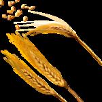 Поле пшеницы раскраска 2