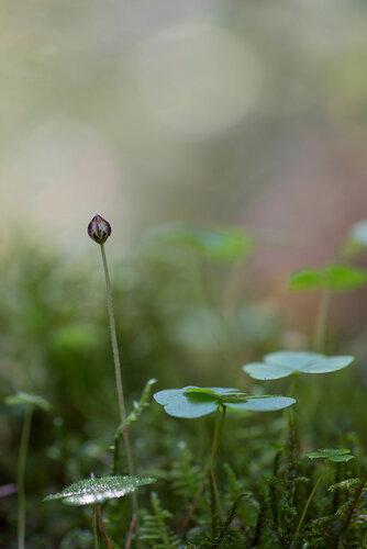 Альбом:  Мой плантариум /  Неразобранное в Мой плантариум Автор фото: Владимир Брюхов