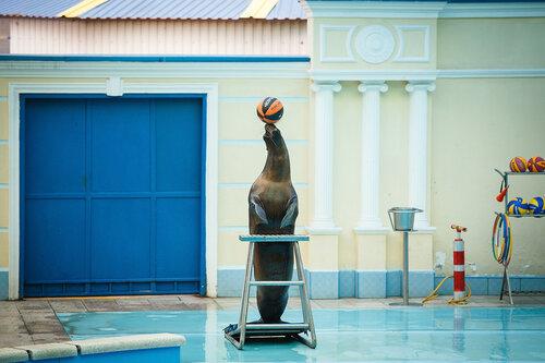 Потрясающее шоу дельфинов в Небуге