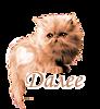 117448092_5230261_dalee_kotyonok1.png