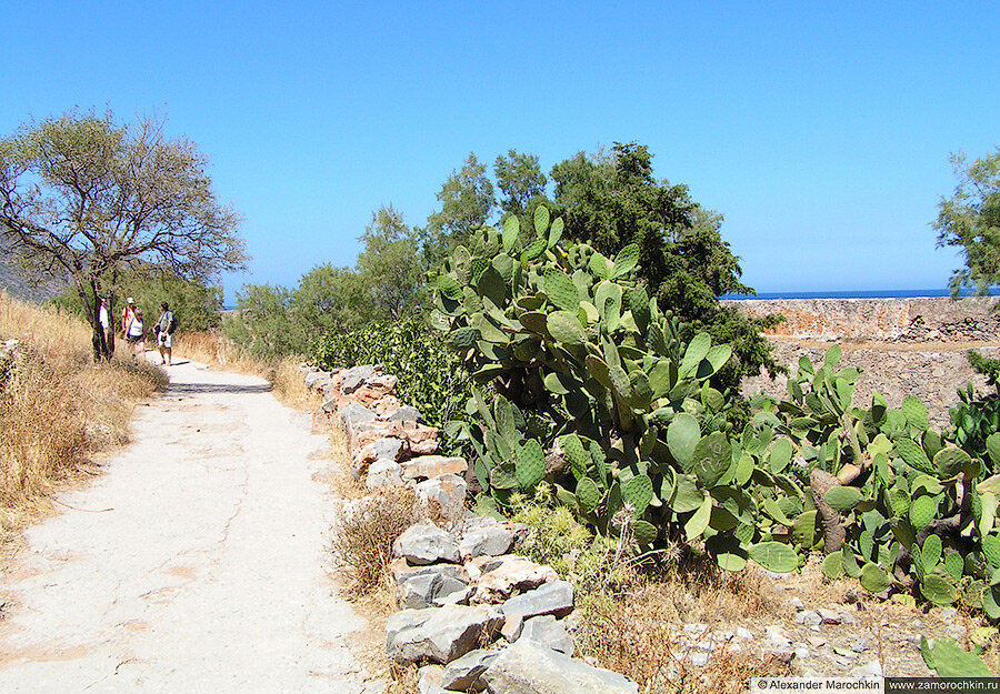 Дорожка и кактусы на острове Спиналонга
