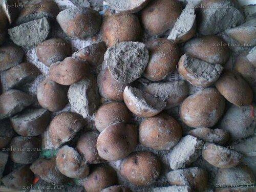 Картофель Фиолетик после резки семенных клубней.