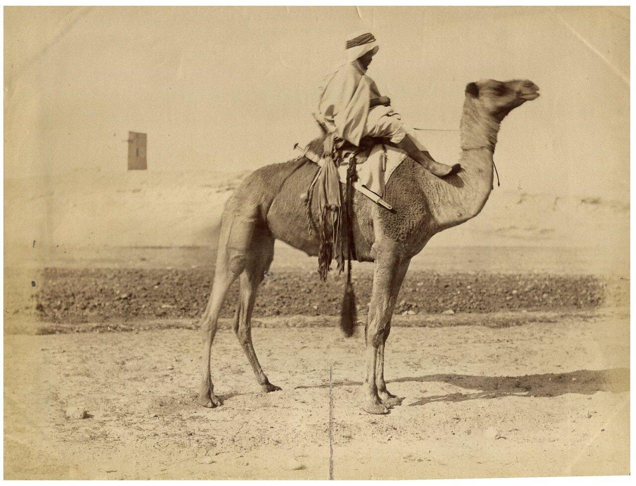 1875. Араб со своим верблюдом