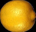 цитрусы (72).png