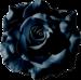 flower clipart: rose