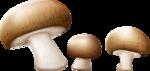 грибочки (9).png