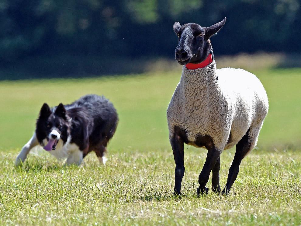 20. Портрет. Тигренок и собака, Словакия. (Фото Ivan Kova):