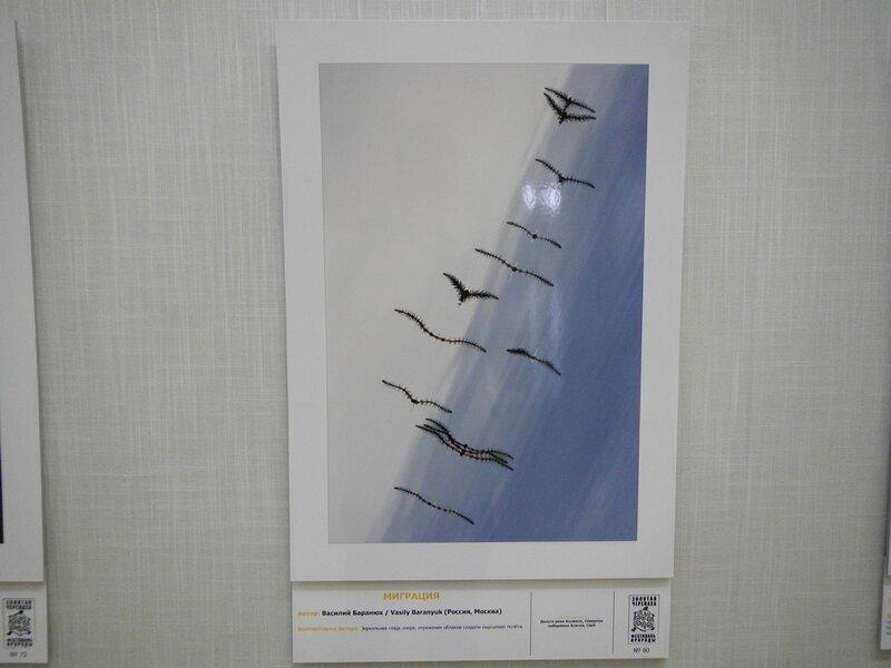 Миграция. Василий Баранюк. Отражение хвоща в воде озера создает иллюзию стаи летящих птиц. На фестивале дикой природы Золотая Черепаха