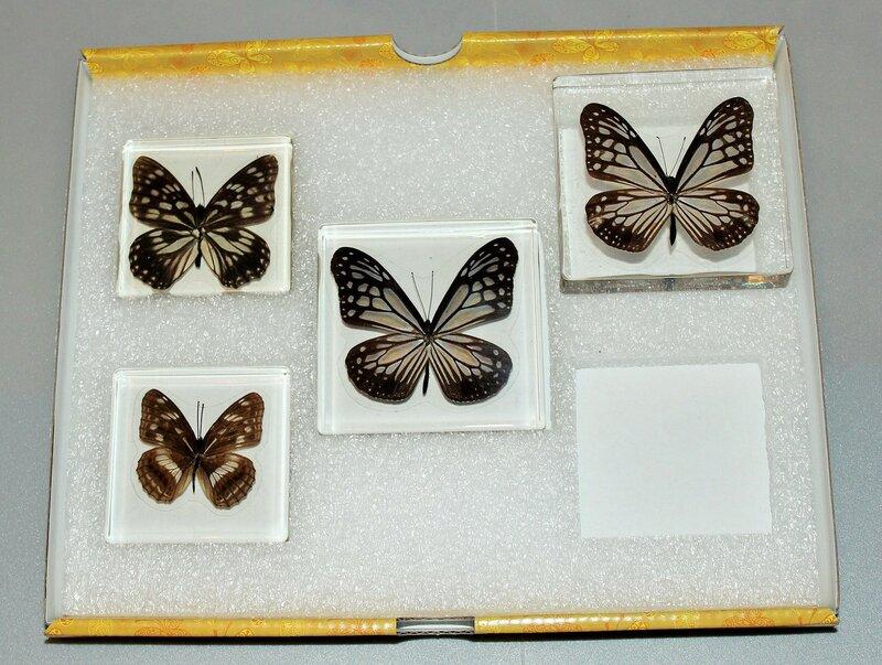 Бабочки №92 - Ленточник Дёрриса (Limenitis Doerriesi)