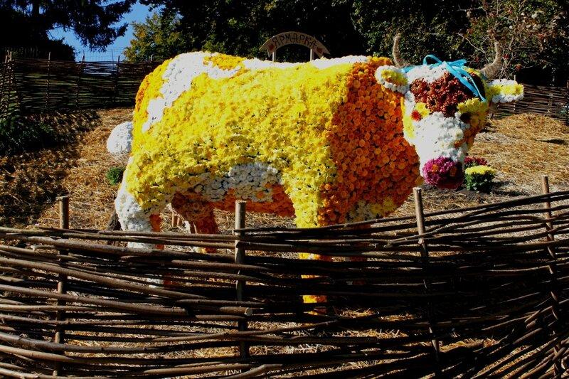 Выставка хризантем 2014