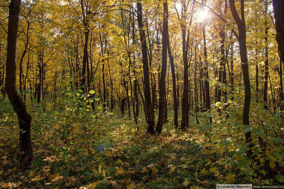 Осенью в лесу