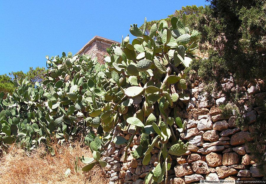 Кактусы на острове Спиналонга, Греция