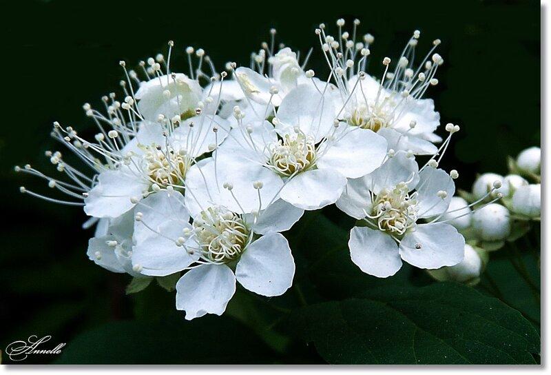 Земные звезды – белые цветы