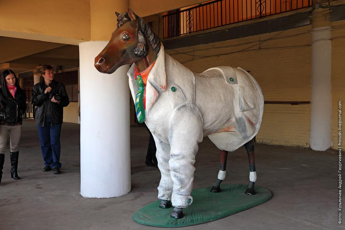 фотографии лошадей