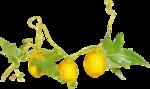 Lemony-freshness_elmt (21).png