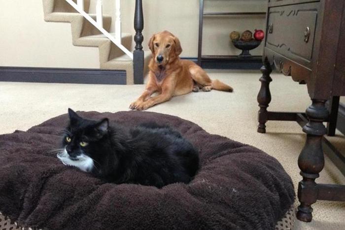 Видео: что делает собака, если кошка занимает ее место