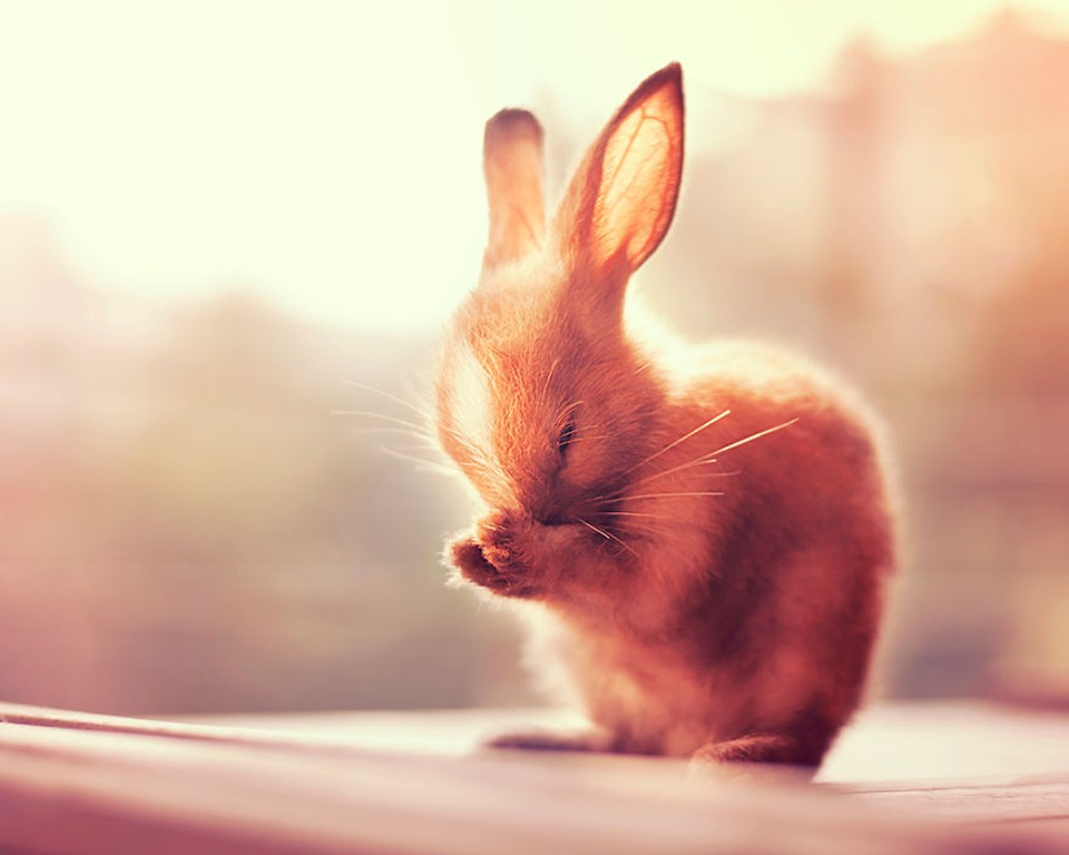 Кролики — это новые котики