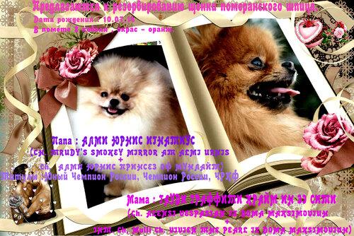 http://img-fotki.yandex.ru/get/6829/37228632.a/0_8d3e5_fd27a56c_L.jpg