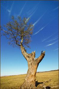 Дерево-конь