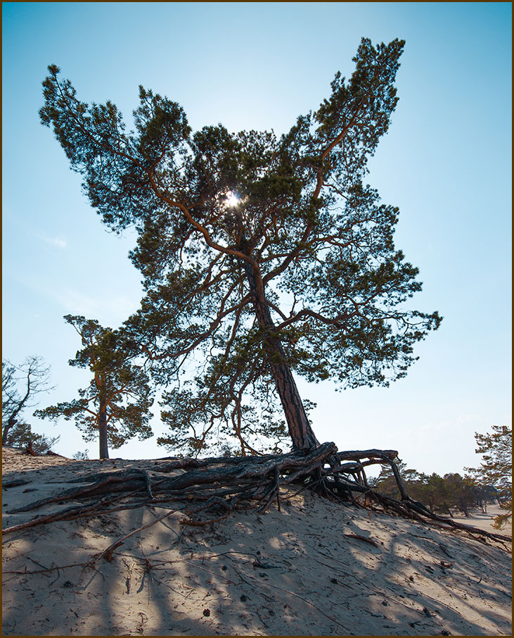 Такое дерево