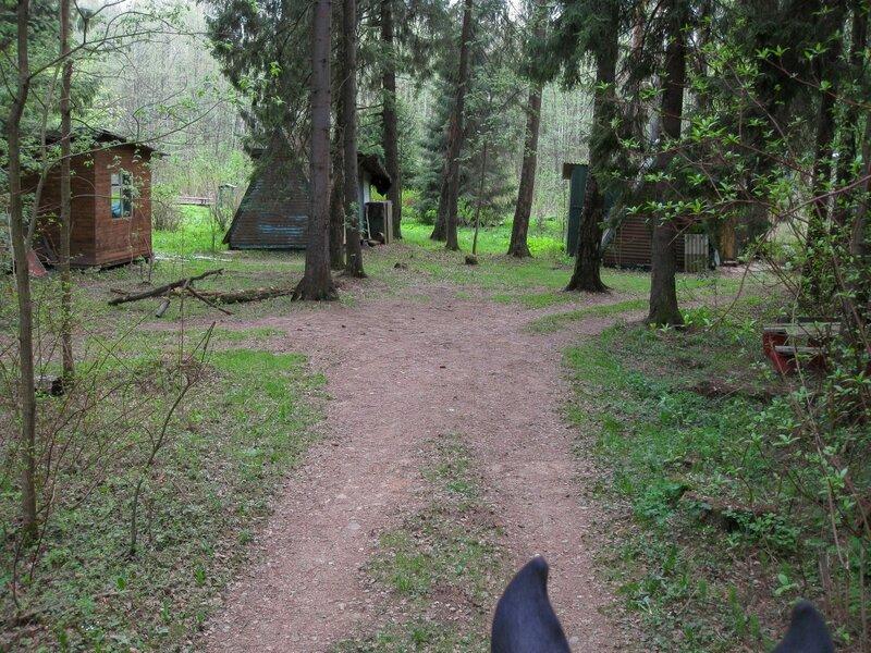 Заброшенная база в лесу