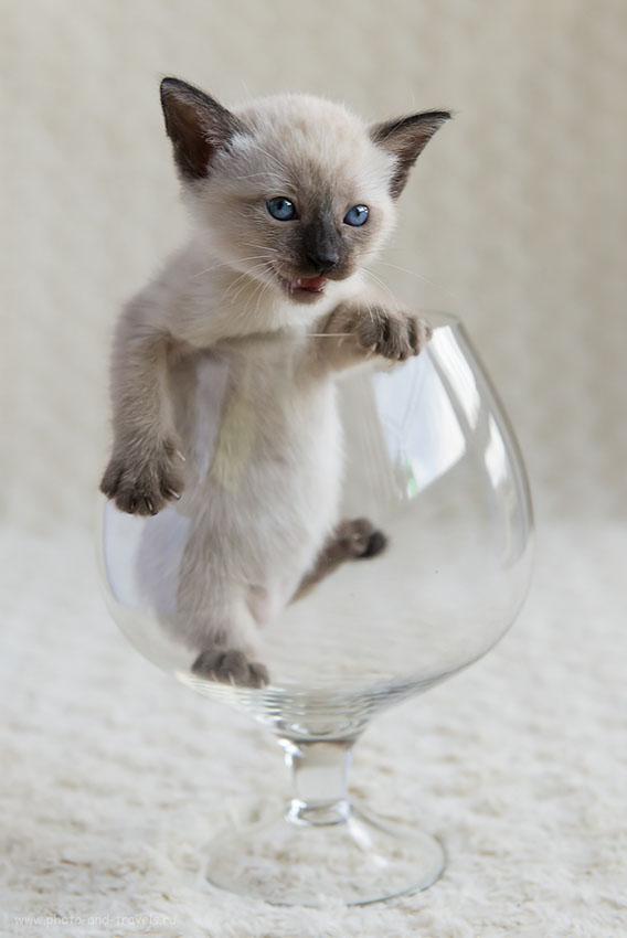 Фотография 9. Как снимать кота в домашней фотостудии. Монстрик (800, 56, 5.0, 1/320)