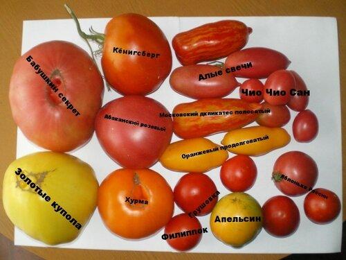 Различные томаты.
