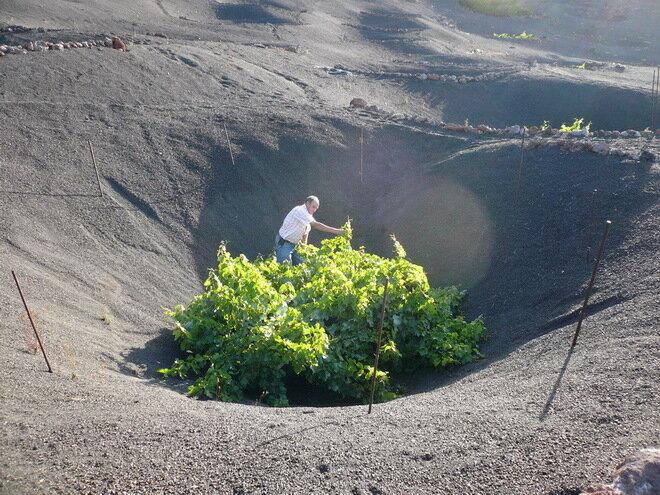 Вулканические виноградники, о.Лансароте