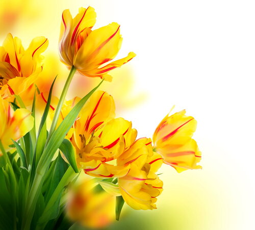 Spring Flowers Desktop Background