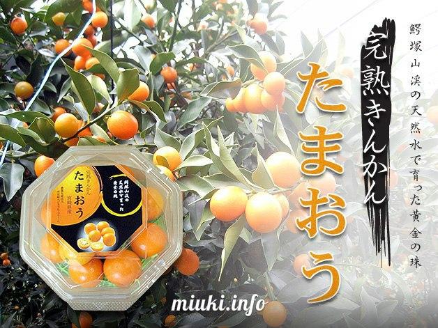 Фрукты Японии Kinkan кумкват