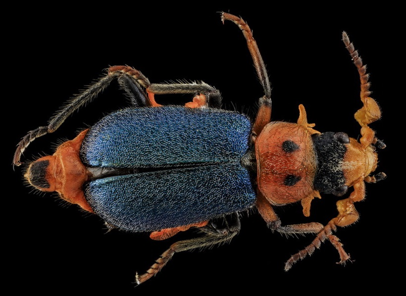 Макрофотографии разноцветных американских пчел 0 13d2a5 90f9e061 orig