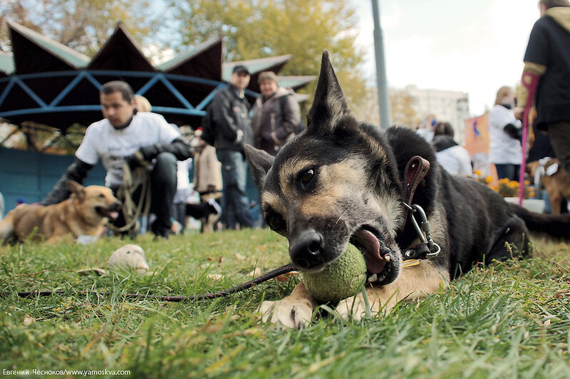 Осень. Фестивальный парк. Собаки. 04.10.14.25..jpg