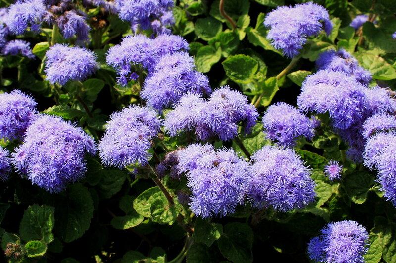 Пушистые цветы