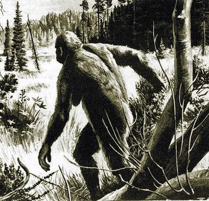 Вятские леса, снежный человек