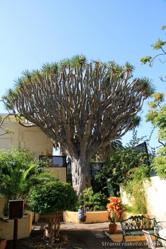 Сад орхидей на Тенерифе